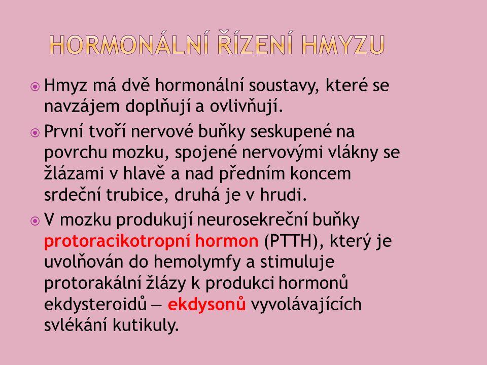  Hmyz má dvě hormonální soustavy, které se navzájem doplňují a ovlivňují.
