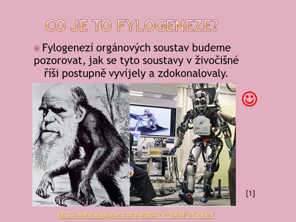 Fylogenezí orgánových soustav budeme pozorovat, jak se tyto soustavy v živočišné říši postupně vyvíjely a zdokonalovaly.