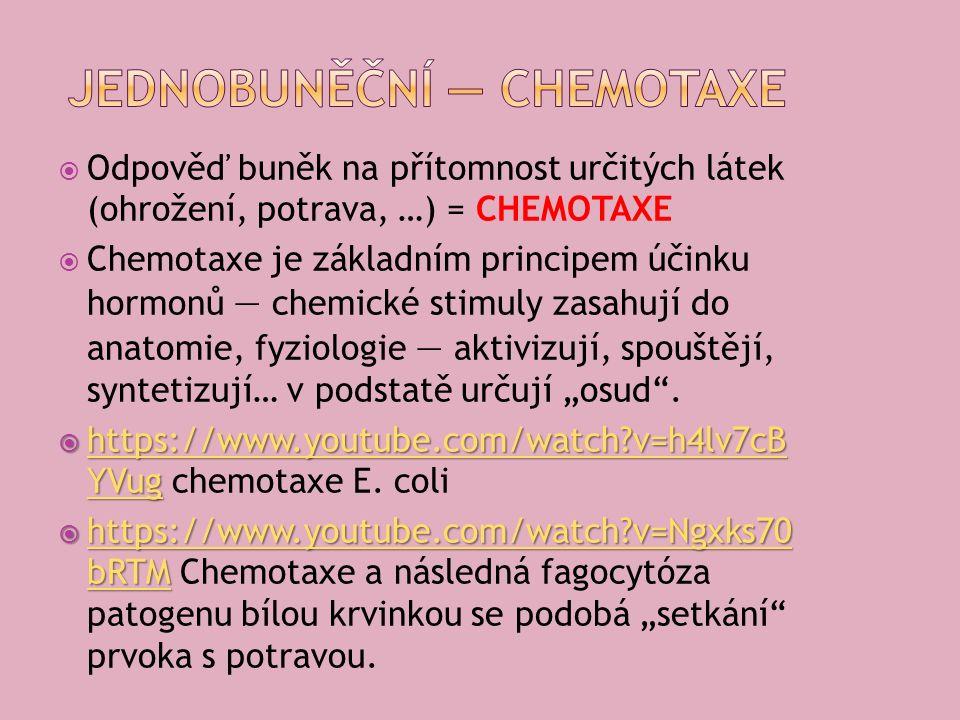 """ Odpověď buněk na přítomnost určitých látek (ohrožení, potrava, …) = CHEMOTAXE  Chemotaxe je základním principem účinku hormonů — chemické stimuly zasahují do anatomie, fyziologie — aktivizují, spouštějí, syntetizují… v podstatě určují """"osud ."""