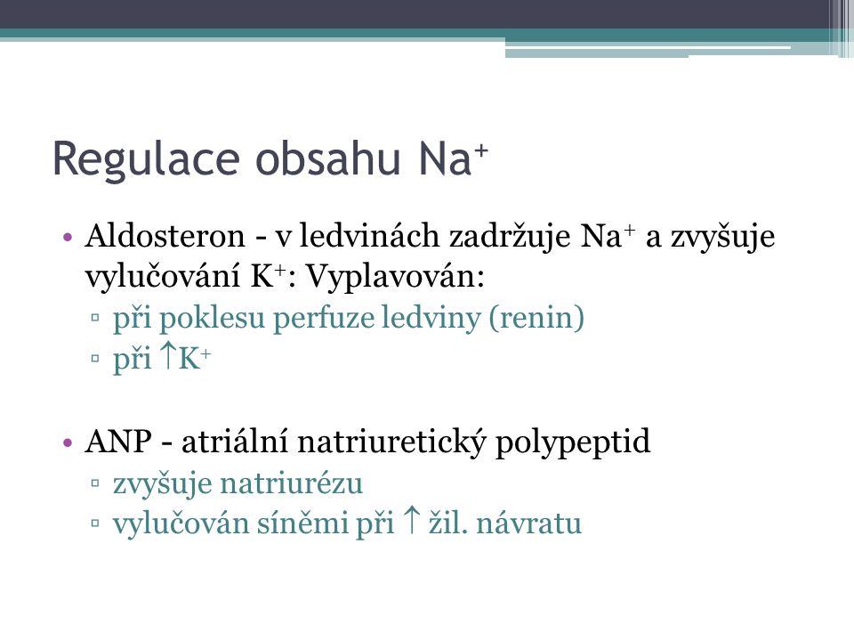 Regulace obsahu Na + Aldosteron - v ledvinách zadržuje Na + a zvyšuje vylučování K + : Vyplavován: ▫při poklesu perfuze ledviny (renin) ▫při  K + ANP - atriální natriuretický polypeptid ▫zvyšuje natriurézu ▫vylučován síněmi při  žil.