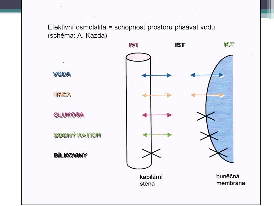 Efektivní osmolalita = schopnost prostoru přisávat vodu (schéma: A. Kazda)