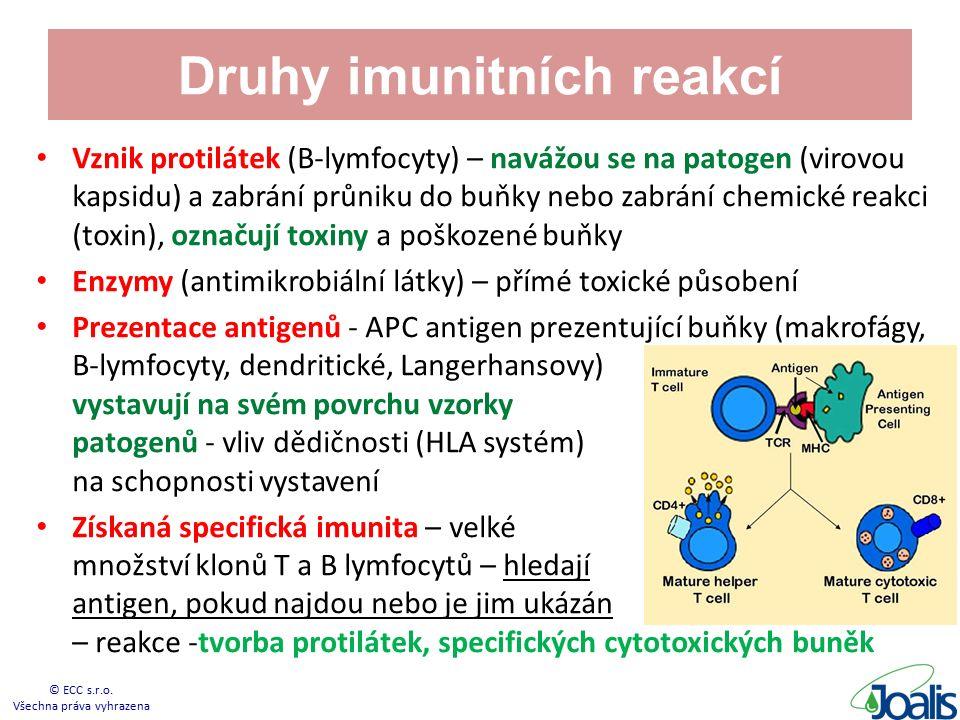 Druhy imunitních reakcí Vznik protilátek (B-lymfocyty) – navážou se na patogen (virovou kapsidu) a zabrání průniku do buňky nebo zabrání chemické reakci (toxin), označují toxiny a poškozené buňky Enzymy (antimikrobiální látky) – přímé toxické působení Prezentace antigenů - APC antigen prezentující buňky (makrofágy, B-lymfocyty, dendritické, Langerhansovy) - vystavují na svém povrchu vzorky patogenů - vliv dědičnosti (HLA systém) na schopnosti vystavení Získaná specifická imunita – velké množství klonů T a B lymfocytů – hledají antigen, pokud najdou nebo je jim ukázán – reakce -tvorba protilátek, specifických cytotoxických buněk © ECC s.r.o.