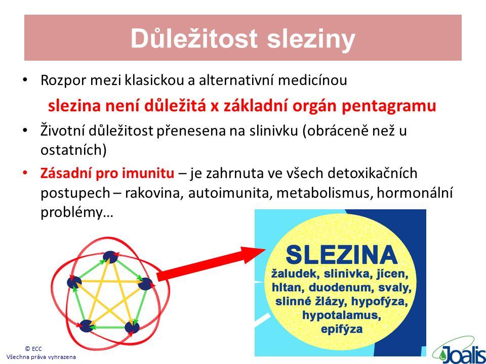 Důležitost sleziny Rozpor mezi klasickou a alternativní medicínou slezina není důležitá x základní orgán pentagramu Životní důležitost přenesena na slinivku (obráceně než u ostatních) Zásadní pro imunitu – je zahrnuta ve všech detoxikačních postupech – rakovina, autoimunita, metabolismus, hormonální problémy… © ECC s.r.o.