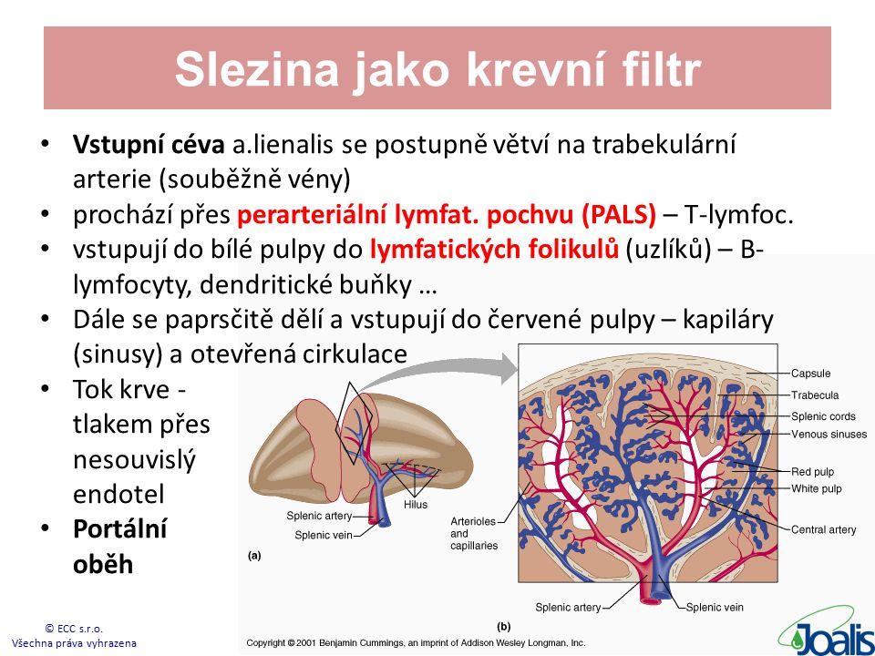 Slezina jako krevní filtr Vstupní céva a.lienalis se postupně větví na trabekulární arterie (souběžně vény) prochází přes perarteriální lymfat.