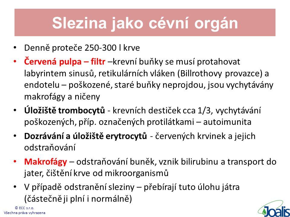 Slezina jako cévní orgán Denně proteče 250-300 l krve Červená pulpa – filtr –krevní buňky se musí protahovat labyrintem sinusů, retikulárních vláken (Billrothovy provazce) a endotelu – poškozené, staré buňky neprojdou, jsou vychytávány makrofágy a ničeny Úložiště trombocytů - krevních destiček cca 1/3, vychytávání poškozených, příp.