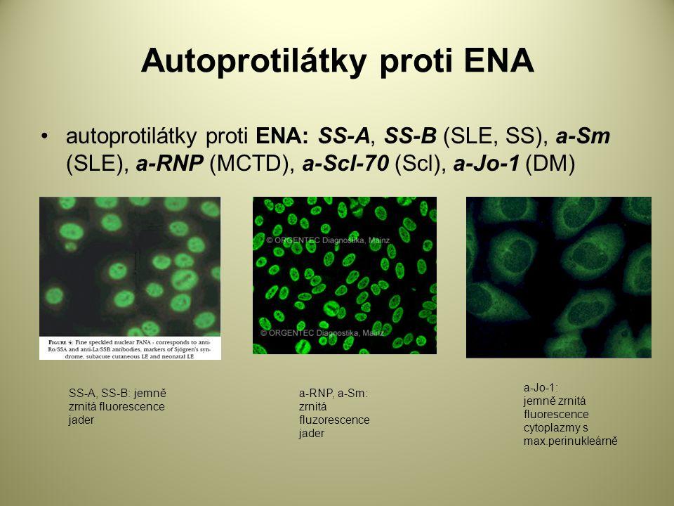 Autoprotilátky proti ENA autoprotilátky proti ENA: SS-A, SS-B (SLE, SS), a-Sm (SLE), a-RNP (MCTD), a-Scl-70 (Scl), a-Jo-1 (DM) a-Jo-1: jemně zrnitá fluorescence cytoplazmy s max.perinukleárně a-RNP, a-Sm: zrnitá fluzorescence jader SS-A, SS-B: jemně zrnitá fluorescence jader