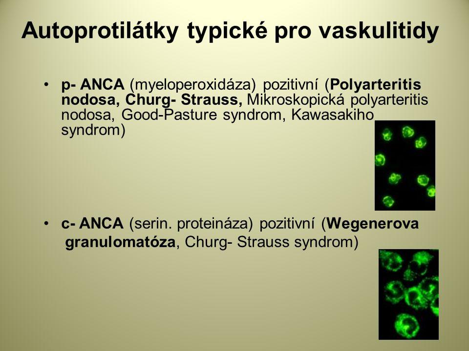 Autoprotilátky typické pro vaskulitidy p- ANCA (myeloperoxidáza) pozitivní (Polyarteritis nodosa, Churg- Strauss, Mikroskopická polyarteritis nodosa, Good-Pasture syndrom, Kawasakiho syndrom) c- ANCA (serin.