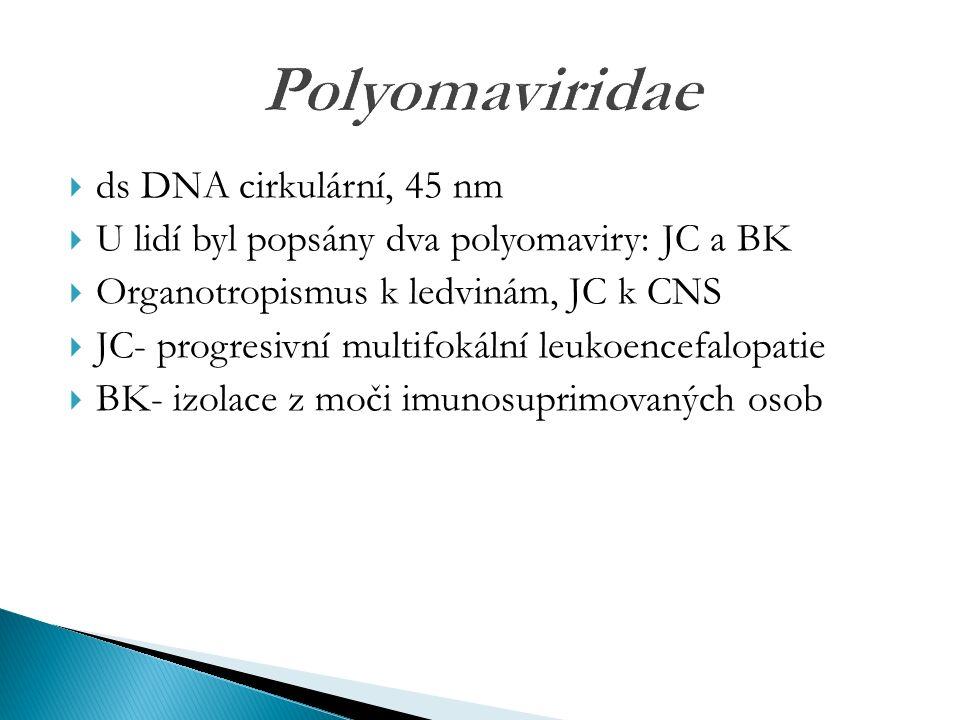 Polyomaviridae  ds DNA cirkulární, 45 nm  U lidí byl popsány dva polyomaviry: JC a BK  Organotropismus k ledvinám, JC k CNS  JC- progresivní multifokální leukoencefalopatie  BK- izolace z moči imunosuprimovaných osob