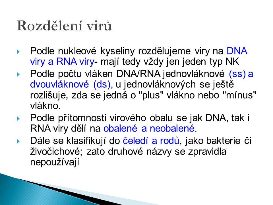 Rozdělení virů  Podle nukleové kyseliny rozdělujeme viry na DNA viry a RNA viry- mají tedy vždy jen jeden typ NK  Podle počtu vláken DNA/RNA jednovláknové (ss) a dvouvláknové (ds), u jednovláknových se ještě rozlišuje, zda se jedná o plus vlákno nebo mínus vlákno.