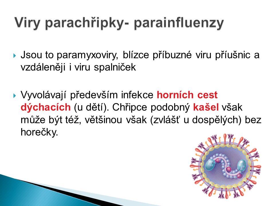 Viry parachřipky- parainfluenzy  Jsou to paramyxoviry, blízce příbuzné viru příušnic a vzdáleněji i viru spalniček  Vyvolávají především infekce horních cest dýchacích (u dětí).