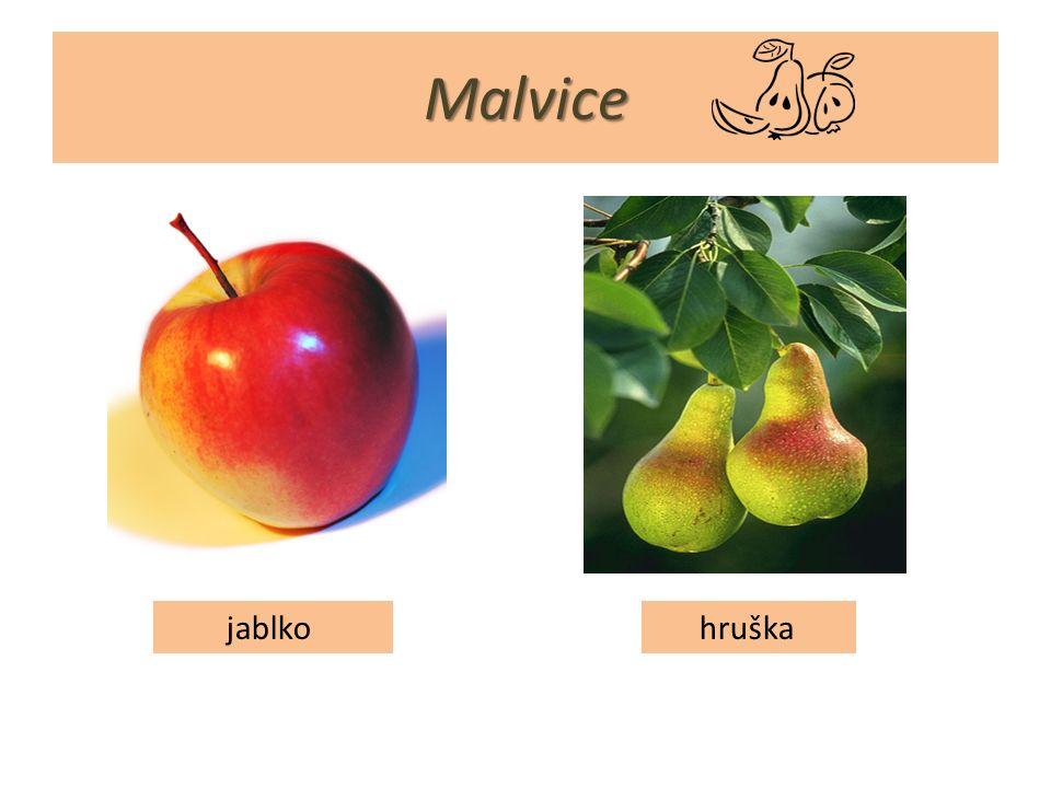 Malvice jablko hruška