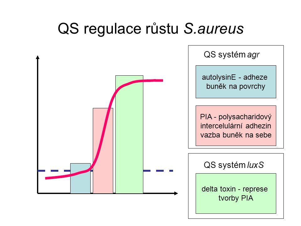 QS regulace růstu S.aureus autolysinE - adheze buněk na povrchy PIA - polysacharidový intercelulární adhezin vazba buněk na sebe delta toxin - represe tvorby PIA QS systém agr QS systém luxS