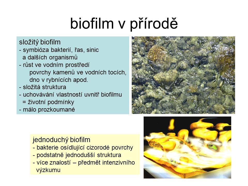 biofilm v přírodě složitý biofilm - symbióza bakterií, řas, sinic a dalších organismů - růst ve vodním prostředí povrchy kamenů ve vodních tocích, dno v rybnících apod.