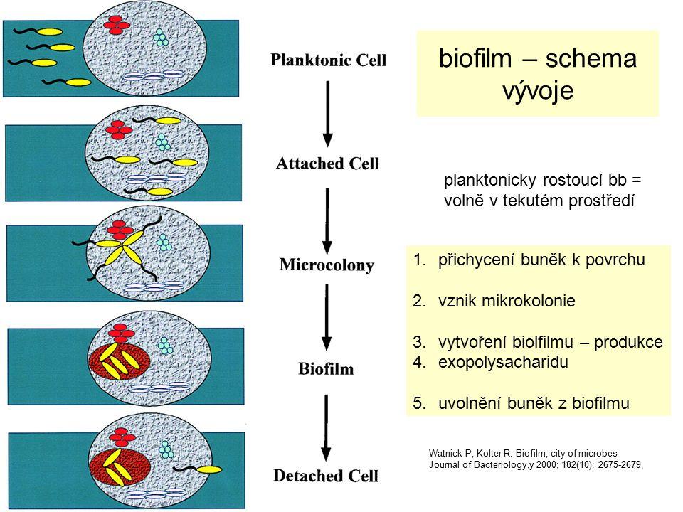 Význam QS systémů a biofilmu regulace růstu bakterií prokázána mezidruhová regulace stafylokoky x G- tyčky podstatně rychlejší horizontální přenos genetické informace dereprese genů ATB rezistence - aktivace QS 4x zvýšila MIC ciprofloxacinu, imipenemu a vankomycinu u S.