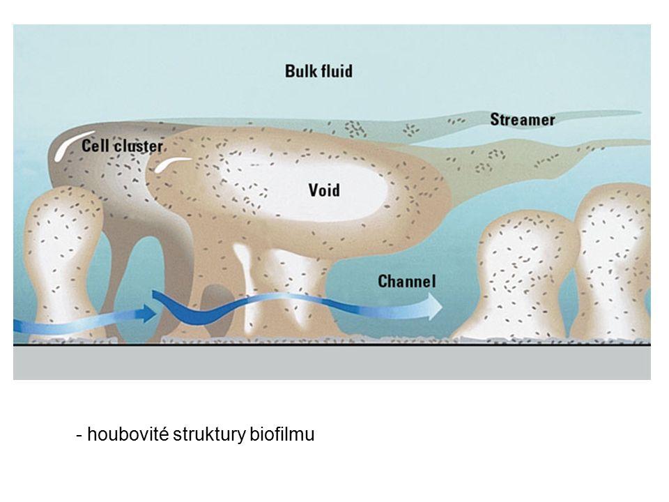 - houbovité struktury biofilmu