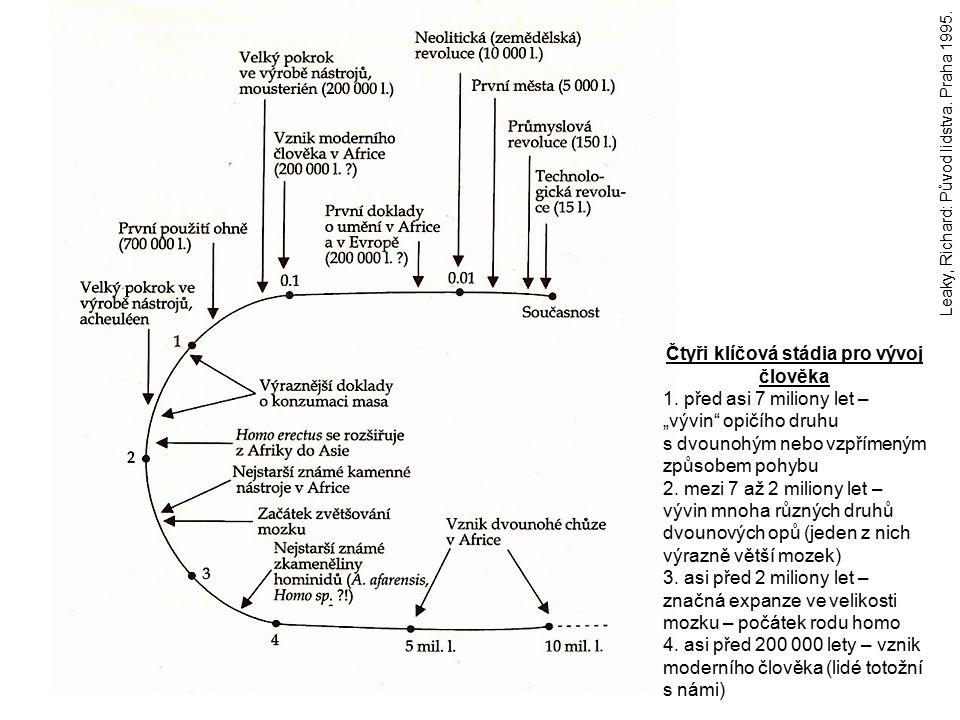 """Leaky, Richard: Původ lidstva. Praha 1995. Čtyři klíčová stádia pro vývoj člověka 1. před asi 7 miliony let – """"vývin"""" opičího druhu s dvounohým nebo v"""