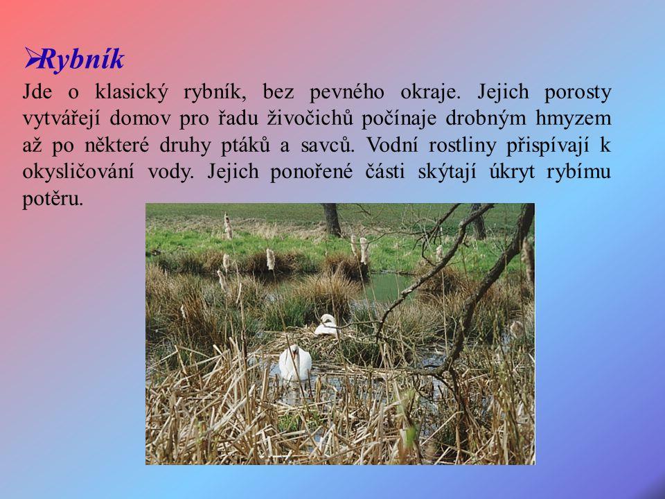 Jde o klasický rybník, bez pevného okraje.