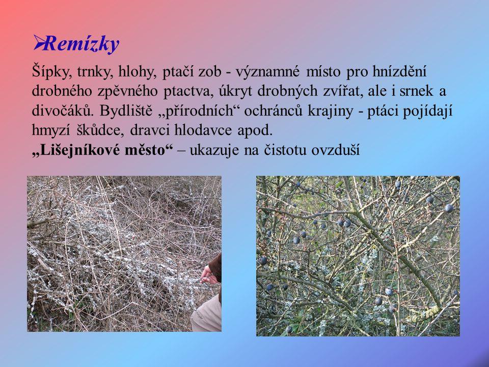 Šípky, trnky, hlohy, ptačí zob - významné místo pro hnízdění drobného zpěvného ptactva, úkryt drobných zvířat, ale i srnek a divočáků.