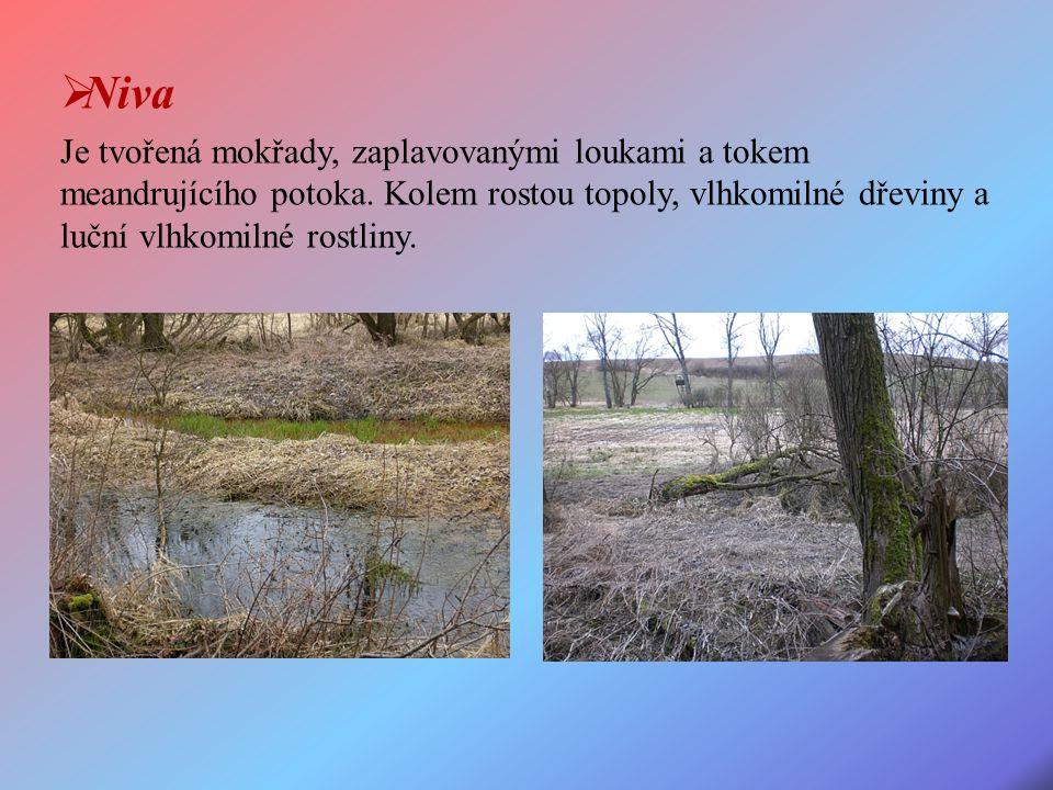 Je tvořená mokřady, zaplavovanými loukami a tokem meandrujícího potoka.