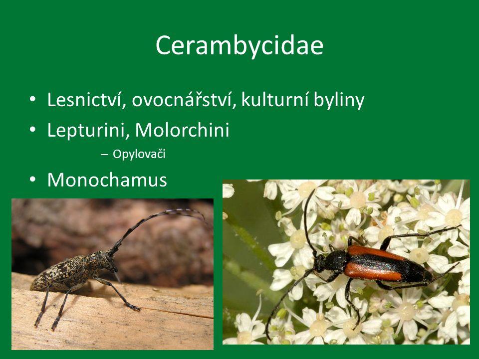 Cerambycidae Lesnictví, ovocnářství, kulturní byliny Lepturini, Molorchini – Opylovači Monochamus