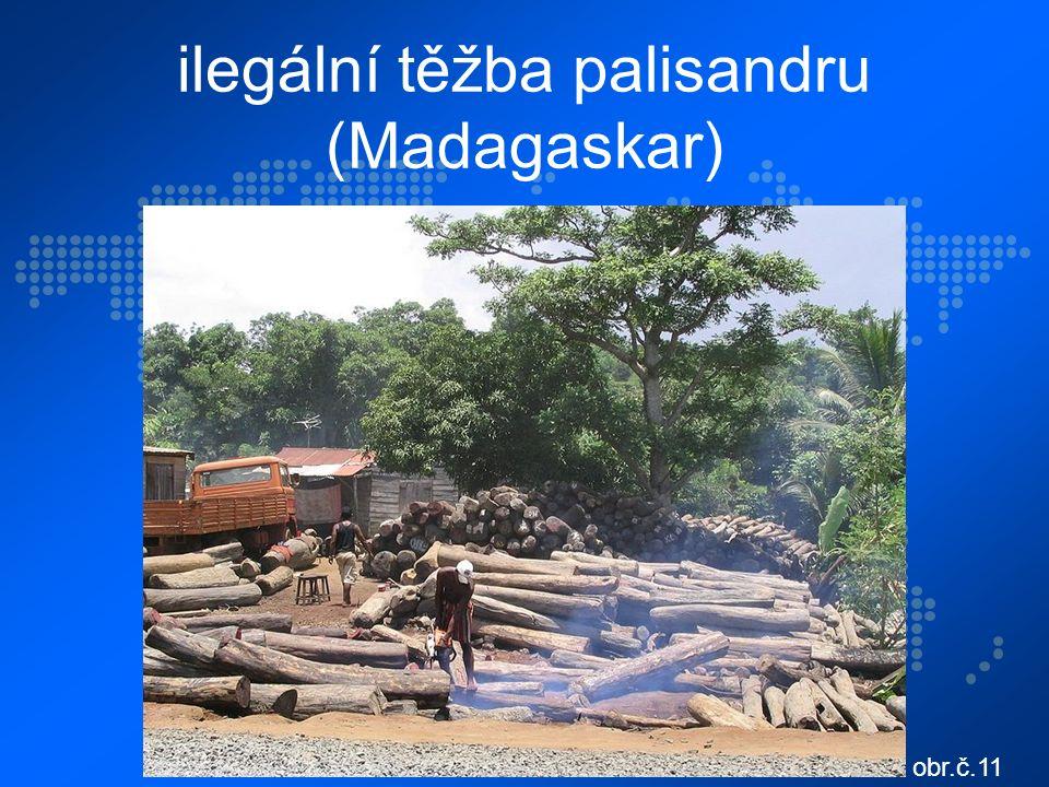 ilegální těžba palisandru (Madagaskar) obr.č.11