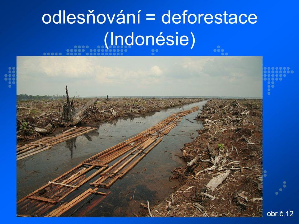 odlesňování = deforestace (Indonésie) obr.č.12