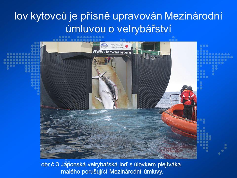 lov kytovců je přísně upravován Mezinárodní úmluvou o velrybářství obr.č.3 Japonská velrybářská loď s úlovkem plejtváka malého porušující Mezinárodní úmluvy.