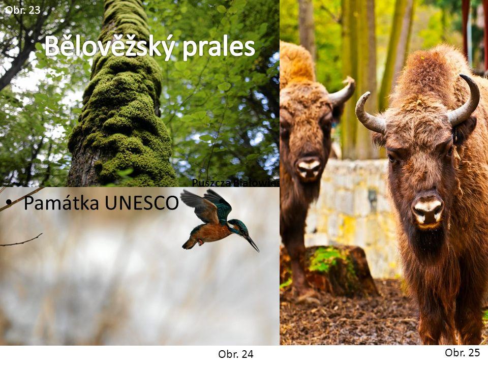 Obr. 24 Obr. 23 Památka UNESCO Puszcza Białowieska Obr. 25
