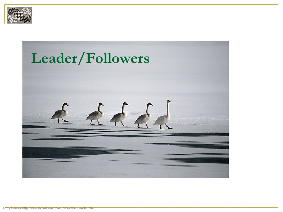 Leader/Followers Tony Newlin, http://www.tonynewlin.com/Follow_the_Leader.html