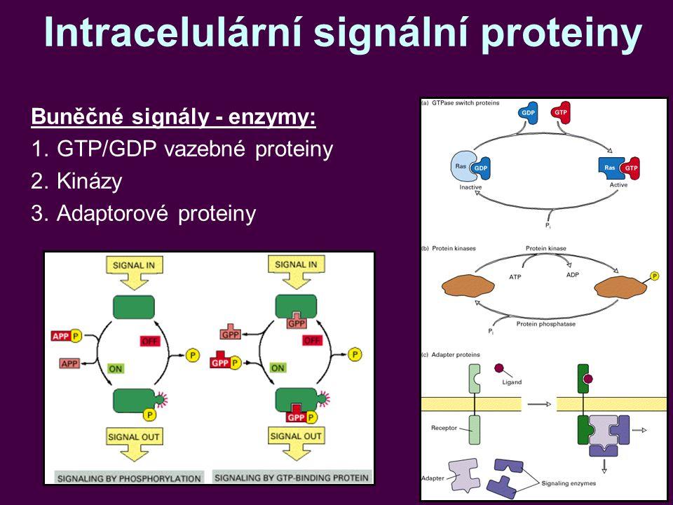 Intracelulární signální proteiny Buněčné signály - enzymy: 1.GTP/GDP vazebné proteiny 2.Kinázy 3.Adaptorové proteiny