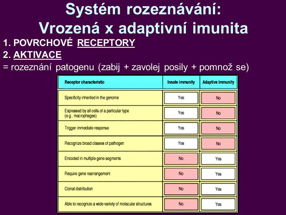 Systém rozeznávání: Vrozená x adaptivní imunita 1. POVRCHOVÉ RECEPTORY 2. AKTIVACE = rozeznání patogenu (zabij + zavolej posily + pomnož se)