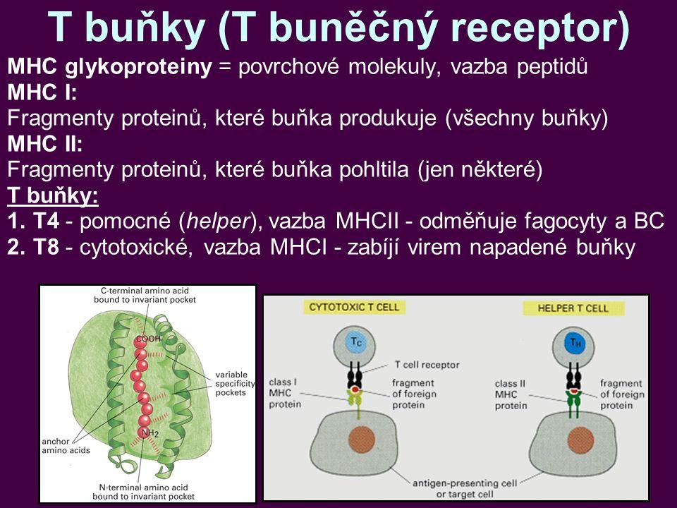 T buňky (T buněčný receptor) MHC glykoproteiny = povrchové molekuly, vazba peptidů MHC I: Fragmenty proteinů, které buňka produkuje (všechny buňky) MHC II: Fragmenty proteinů, které buňka pohltila (jen některé) T buňky: 1.T4 - pomocné (helper), vazba MHCII - odměňuje fagocyty a BC 2.T8 - cytotoxické, vazba MHCI - zabíjí virem napadené buňky
