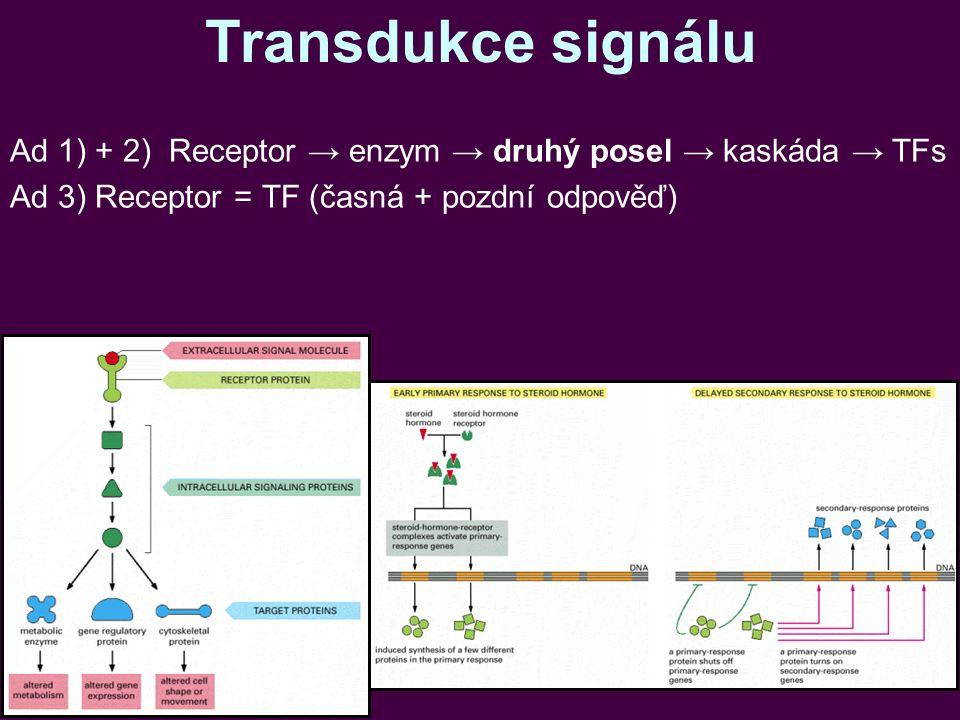 Transdukce signálu Ad 1) + 2) Receptor → enzym → druhý posel → kaskáda → TFs Ad 3) Receptor = TF (časná + pozdní odpověď)