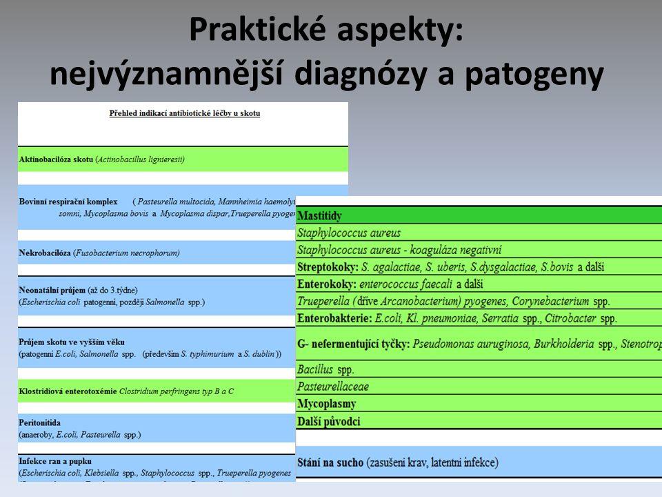 Praktické aspekty: nejvýznamnější diagnózy a patogeny