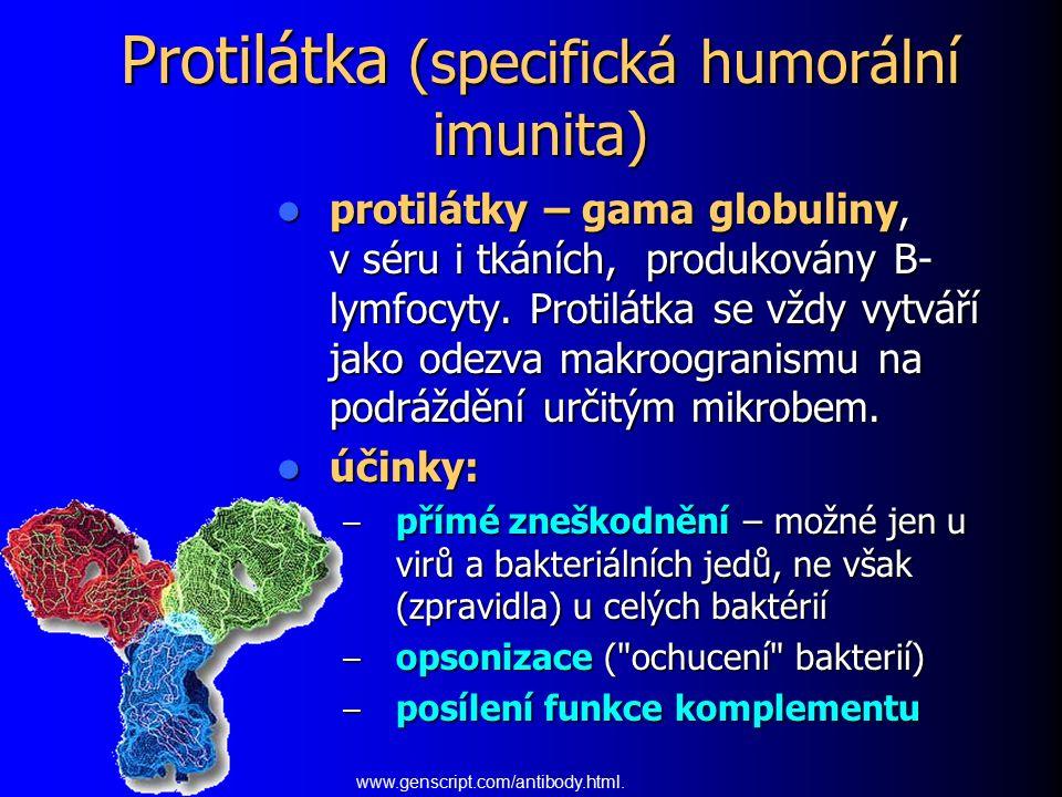 Protilátka (specifická humorální imunita) protilátky – gama globuliny, v séru i tkáních, produkovány B- lymfocyty. Protilátka se vždy vytváří jako ode