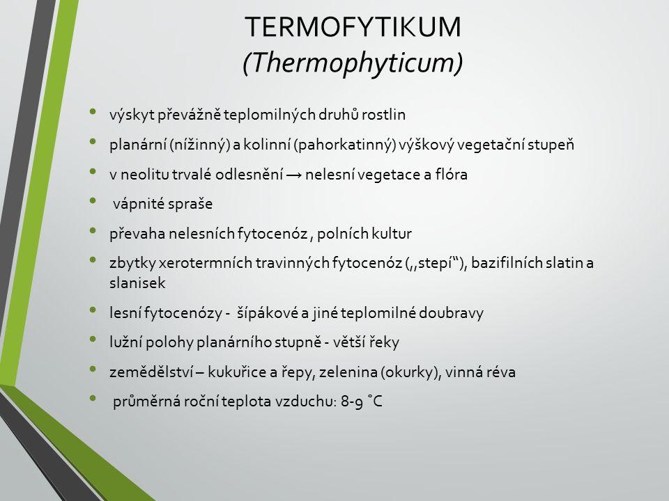 TERMOFYTIKUM (Thermophyticum) výskyt převážně teplomilných druhů rostlin planární (nížinný) a kolinní (pahorkatinný) výškový vegetační stupeň v neolitu trvalé odlesnění → nelesní vegetace a flóra vápnité spraše převaha nelesních fytocenóz, polních kultur zbytky xerotermních travinných fytocenóz (,,stepí ), bazifilních slatin a slanisek lesní fytocenózy - šípákové a jiné teplomilné doubravy lužní polohy planárního stupně - větší řeky zemědělství – kukuřice a řepy, zelenina (okurky), vinná réva průměrná roční teplota vzduchu: 8-9 ˚C