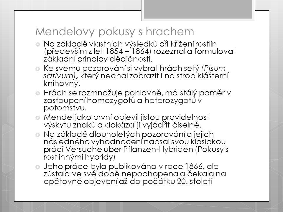 Mendelovy pokusy s hrachem  Na základě vlastních výsledků při křížení rostlin (především z let 1854 – 1864) rozeznal a formuloval základní principy dědičnosti.