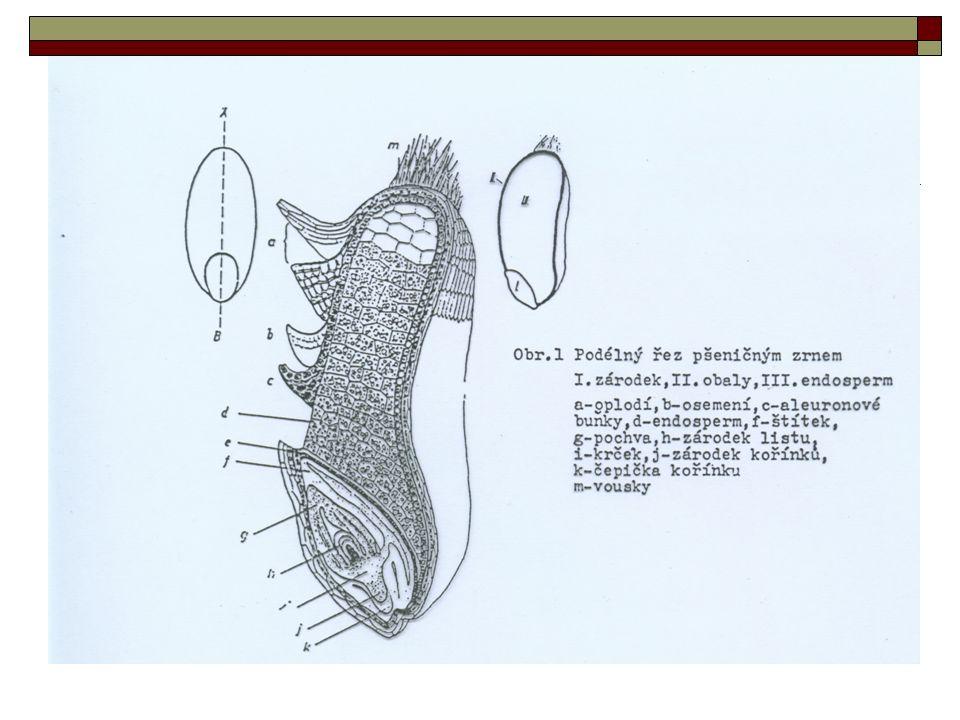 Chemické složení obilného zrna  Základními stavebními složkami podle množství jsou: sacharidy a bílkoviny lipidy, minerální látky vitaminy, barviva složky, které mají růstové regulační a genetické funkce
