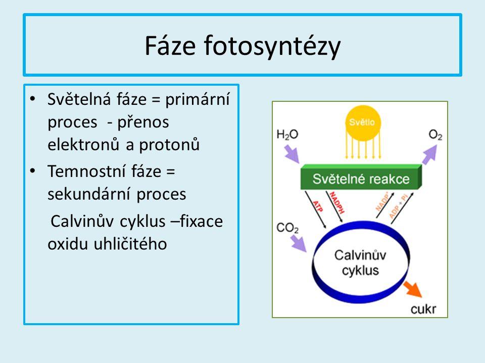 Fáze fotosyntézy Světelná fáze = primární proces - přenos elektronů a protonů Temnostní fáze = sekundární proces Calvinův cyklus –fixace oxidu uhličit