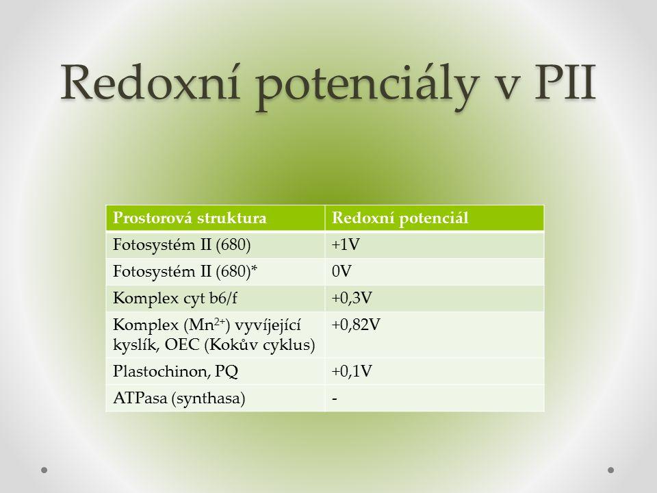 Redoxní potenciály v PII Prostorová strukturaRedoxní potenciál Fotosystém II (680)+1V Fotosystém II (680)*0V Komplex cyt b6/f+0,3V Komplex (Mn 2+ ) vyvíjející kyslík, OEC (Kokův cyklus) +0,82V Plastochinon, PQ+0,1V ATPasa (synthasa)-