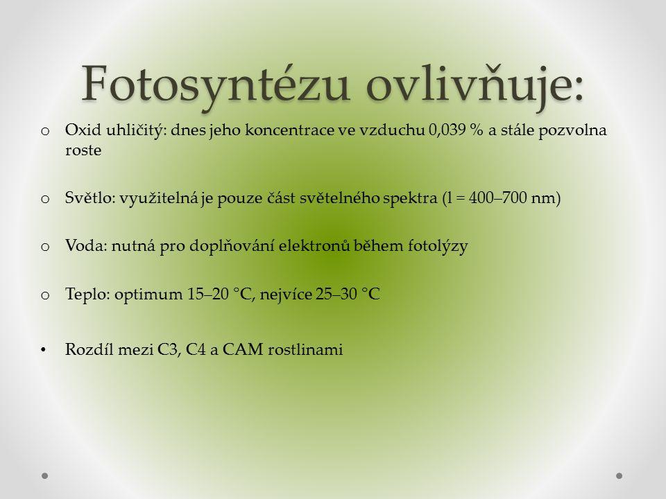 Fotosyntézu ovlivňuje: o Oxid uhličitý: dnes jeho koncentrace ve vzduchu 0,039 % a stále pozvolna roste o Světlo: využitelná je pouze část světelného spektra (l = 400–700 nm) o Voda: nutná pro doplňování elektronů během fotolýzy o Teplo: optimum 15–20 °C, nejvíce 25–30 °C Rozdíl mezi C3, C4 a CAM rostlinami