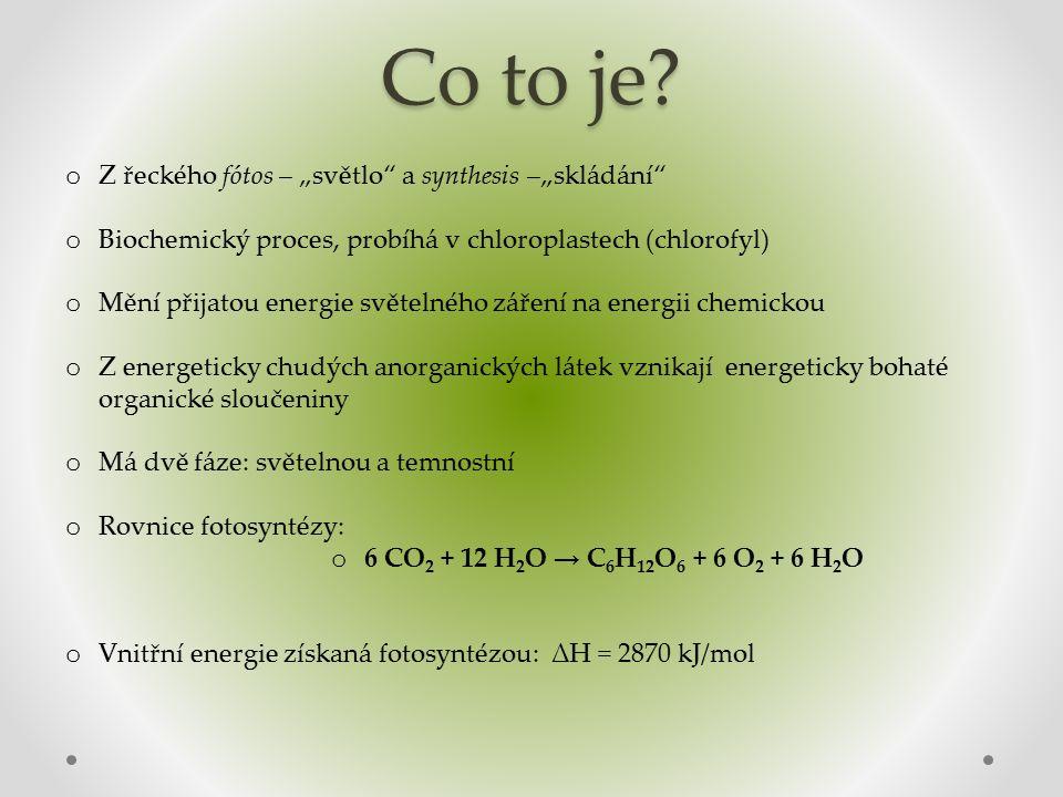 Cyklická fotosyntéza o kvantum světla uvede chlorofyl fotosystému I (P700) do excitovaného stavu o vyrazí se elektrony o systém přenašečů je vrátí na původní místo o cestou předají energii na tvorbu ATP