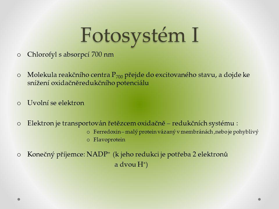 Fotosystém I o Chlorofyl s absorpcí 700 nm o Molekula reakčního centra P 700 přejde do excitovaného stavu, a dojde ke snížení oxidačněredukčního potenciálu o Uvolní se elektron o Elektron je transportován řetězcem oxidačně – redukčních systému : o Ferredoxin – malý protein vázaný v membránách,nebo je pohyblivý o Flavoprotein o Konečný příjemce: NADP + (k jeho redukci je potřeba 2 elektronů a dvou H + )