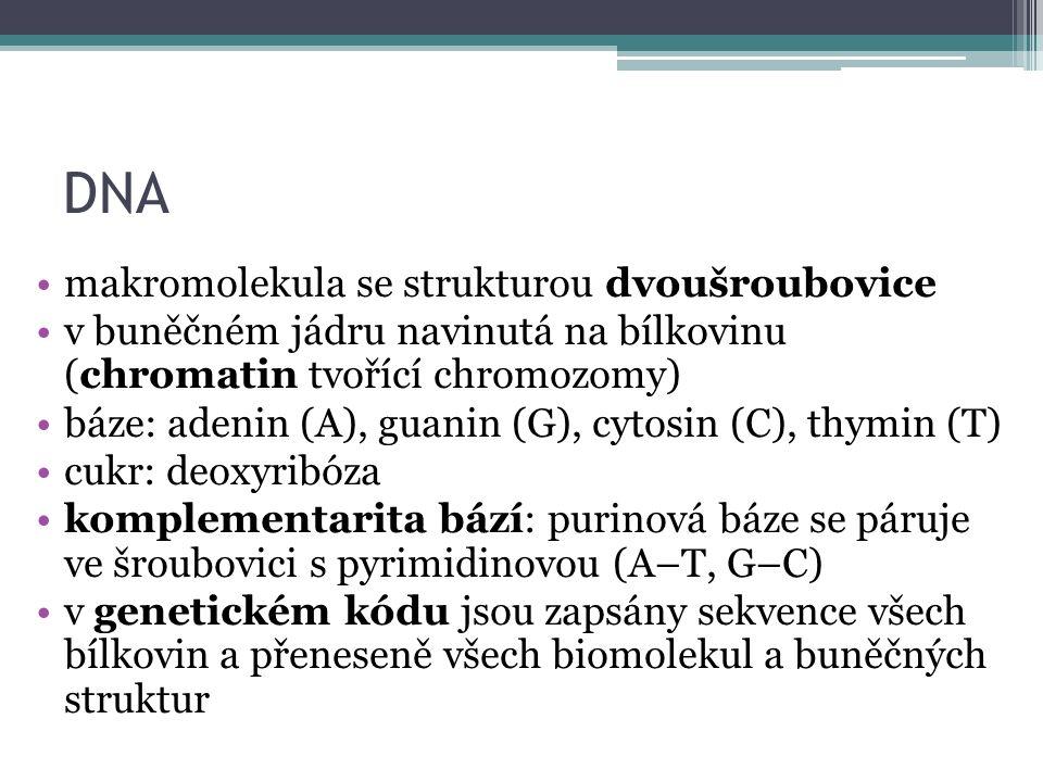 DNA makromolekula se strukturou dvoušroubovice v buněčném jádru navinutá na bílkovinu (chromatin tvořící chromozomy) báze: adenin (A), guanin (G), cytosin (C), thymin (T) cukr: deoxyribóza komplementarita bází: purinová báze se páruje ve šroubovici s pyrimidinovou (A–T, G–C) v genetickém kódu jsou zapsány sekvence všech bílkovin a přeneseně všech biomolekul a buněčných struktur