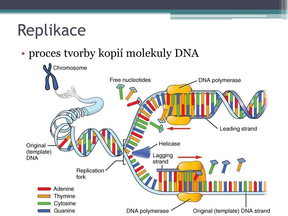 Replikace proces tvorby kopií molekuly DNA