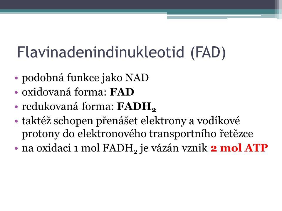 Flavinadenindinukleotid (FAD) podobná funkce jako NAD oxidovaná forma: FAD redukovaná forma: FADH 2 taktéž schopen přenášet elektrony a vodíkové protony do elektronového transportního řetězce na oxidaci 1 mol FADH 2 je vázán vznik 2 mol ATP