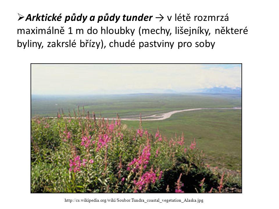  Arktické půdy a půdy tunder → v létě rozmrzá maximálně 1 m do hloubky (mechy, lišejníky, některé byliny, zakrslé břízy), chudé pastviny pro soby http://cs.wikipedia.org/wiki/Soubor:Tundra_coastal_vegetation_Alaska.jpg