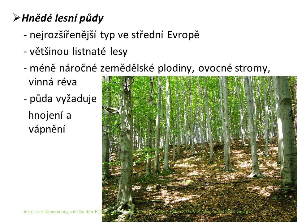  Hnědé lesní půdy - nejrozšířenější typ ve střední Evropě - většinou listnaté lesy - méně náročné zemědělské plodiny, ovocné stromy, vinná réva - půda vyžaduje hnojení a vápnění http://cs.wikipedia.org/wiki/Soubor:Palkovick%C3%A9_h%C5%AFrky,_Bab%C3%AD_hora,_bu%C4%8Dina.jpg