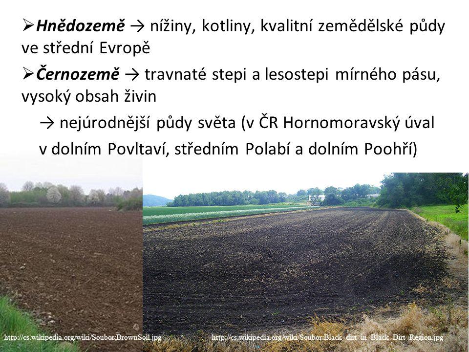  Hnědozemě → nížiny, kotliny, kvalitní zemědělské půdy ve střední Evropě  Černozemě → travnaté stepi a lesostepi mírného pásu, vysoký obsah živin → nejúrodnější půdy světa (v ČR Hornomoravský úval v dolním Povltaví, středním Polabí a dolním Poohří) http://cs.wikipedia.org/wiki/Soubor:BrownSoil.jpghttp://cs.wikipedia.org/wiki/Soubor:Black_dirt_in_Black_Dirt_Region.jpg