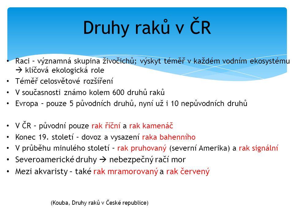 Druhy raků v ČR Raci – významná skupina živočichů; výskyt téměř v každém vodním ekosystému  klíčová ekologická role Téměř celosvětové rozšíření V sou